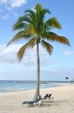 Ligstoelen onder Palm op Tropisch Strand Royalty-vrije Stock Afbeeldingen