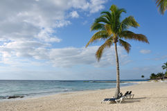 Ligstoelen onder Palm op Tropisch Strand Royalty-vrije Stock Fotografie