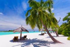 Ligstoelen onder palmen op een tropisch strand Royalty-vrije Stock Foto