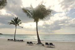 Ligstoelen onder Palmen op Tropisch Strand Royalty-vrije Stock Fotografie