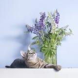 Ligt de gestreepte kat leuke kat dichtbij lupines in vaas Stock Fotografie
