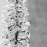 Ligularia przewalskii plant with yellow flowers on a background of gray concrete pillar. Stock Images
