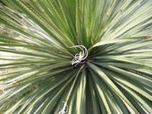 Ligurian plantlife Royalty-vrije Stock Foto's