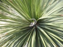 Liguryjski plantlife Zdjęcia Royalty Free