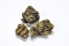 Ligusticum sinense Oliv cv Chuanxiong霍特 库存图片