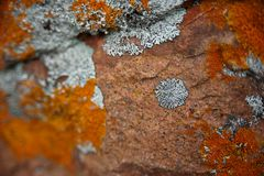 Lihens on stones. Colorful Lihens on the stone. Russian North. White Sea Royalty Free Stock Images