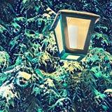 Lihgt рождественской елки стоковые фото