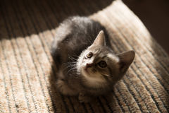 Liitle grey striped cat lying on sofa, indoor Stock Photo