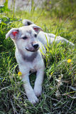 Liitle puppy Stock Images