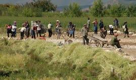 Lijiang, Twp,中国: 域的工作者 库存图片
