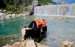 lijiang del shangrila, Yunnan, China Imágenes de archivo libres de regalías