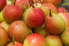 Lijiang, fruto saudável da pera do alimento de Yunnan Shuhe ------- Imagem de Stock