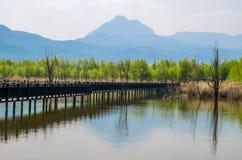 Lijiang Lashi湖沼泽地是一个全国自然风景点在市丽江附近,中国 免版税库存照片