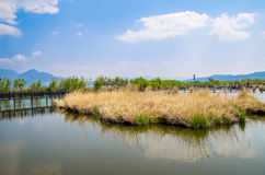 Lijiang Lashi湖沼泽地是一个全国自然风景点在市丽江附近,中国 免版税库存图片