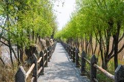 Lijiang Lashi湖沼泽地是一个全国自然风景点在市丽江附近,中国 库存照片