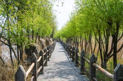 Lijiang Lashi Lake Wetlands is a national natural scenic spot near the city of Lijiang,China. stock photos