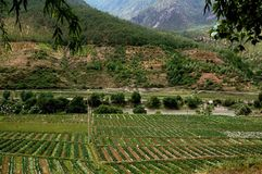 Lijiang Twp, China: Strawberry Fields Royalty Free Stock Image