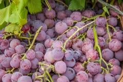 Lijiang, uvas de la fruta de la comida sana de Yunnan Shuhe ------- Imagenes de archivo