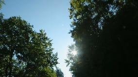 Lijn door luifels van boom, zon wordt door bladeren, upview van het bewegen van auto wordt gezien gevormd die stock video