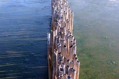 Lijn droog bamboe Stock Foto