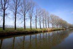 Lijn van bomen Stock Foto's