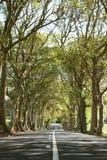 Lijn van Bomen Stock Afbeeldingen