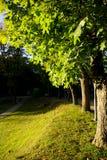 Lijn van bomen Stock Fotografie