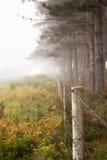 Lijn van bomen in de mist Royalty-vrije Stock Afbeeldingen