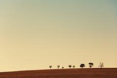 Lijn van bomen op gebied Stock Foto