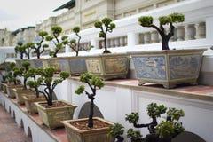 Lijn van bonsai Royalty-vrije Stock Afbeelding