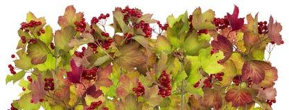 Lijn van de herfsttakken en bessen Stock Afbeelding
