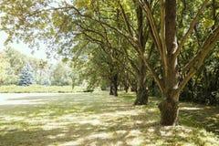 Lijn van eiken, Dendrological-Park van de Nationale Reserve askania-Nova, de Oekraïne Stock Fotografie