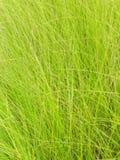 Lijn van groen gras voor achtergrond stock afbeeldingen