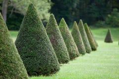 Lijn van kegel altijdgroene struiken in gecultiveerd park Royalty-vrije Stock Foto's