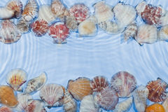 Lijn van overzeese shells in het water Stock Foto