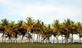 Lijn van palmen in tropische bestemming met niemand Stock Afbeeldingen
