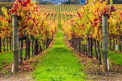 Lijn van wijnstokken stock afbeeldingen
