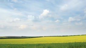 Lijn van witte wolken die zich op de blauwe hemel over geel raapzaadgebied bewegen stock footage