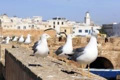 Lijn van zeemeeuwwacht de vesting van Essaouira, Marokko Essaouira is een stad in het westelijke Marokkaanse gebied op stock afbeelding