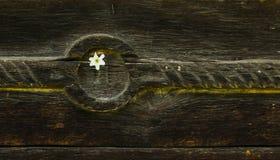 Lijnen stock afbeelding