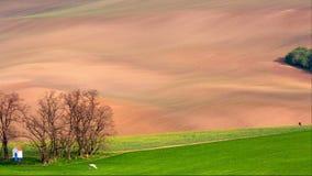 Lijnen en golven met bomen en kapel in de lente, Zuid-Moravië, Tsjechische Republiek stock video