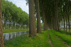 Lijnen van bomen langs Schipdonk-kanaal tussen Brugge en damme stock foto's