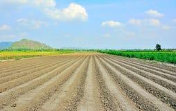 Lijnen van grond door tractoren worden de gemaakt heeft blauwe hemel en achtergrond die Stock Foto's