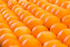Lijnen van vele sinaasappelen in rijen Stock Afbeeldingen