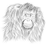 Lijntekening van Pongo-abelii, Sumatran-Orangoetan, primaat stock illustratie