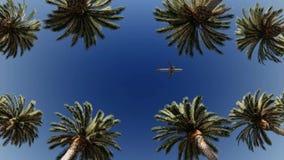Lijnvliegtuig die over palmen overgaan stock footage