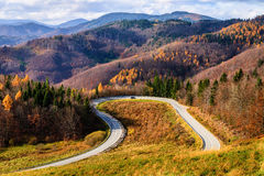 Lijnweg in de herfstbos Stock Foto