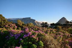 Lijstberg en Leeuwenhoofd, Cape Town Stock Fotografie
