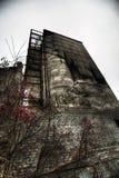 Lijsterbes bij remnanst van het industriële gebouw Stock Fotografie