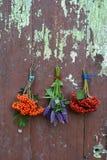 Lijsterbes en de bos van de van de viburnumbes en anijsplant hyssop stock afbeeldingen